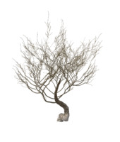 3d model random desert dry tree bush