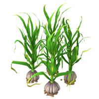 garlic planting 3d max
