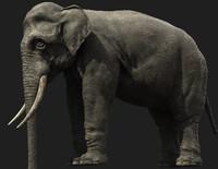 elephant ivory 3d model