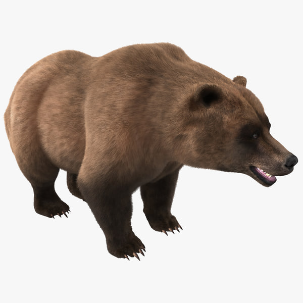 Grizzly Bear Fur wildlife vray creature beast realistic wild life animal large forest woods mountain Ursus arctos ssp brown kodiak california