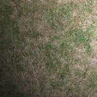 Grass #02 Texture