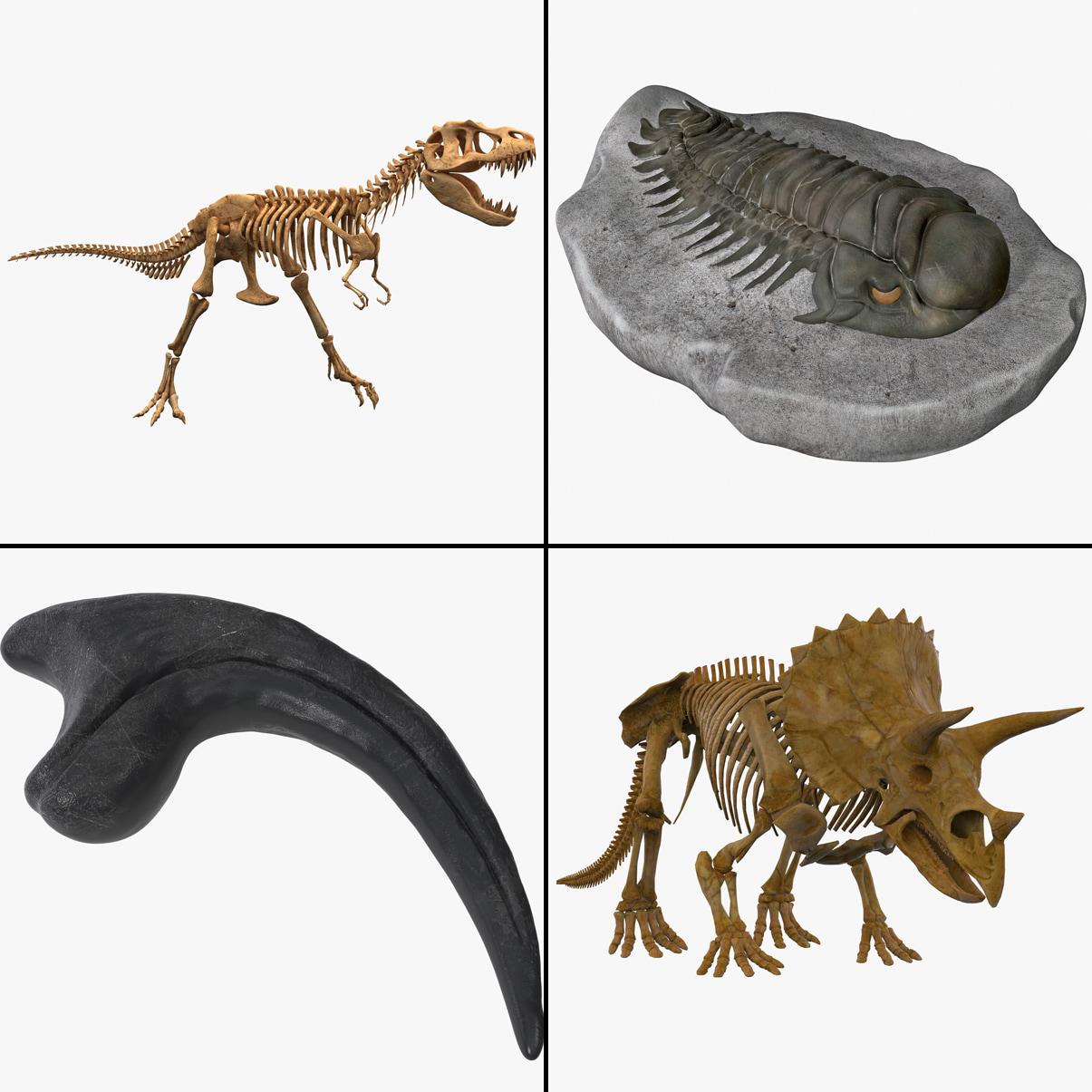 fossilsig copy.jpg