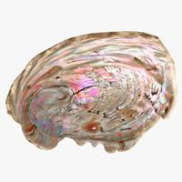 3d realistic haliotis midae model