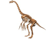 nothronychus therizinosaurus skeleton bones 3d max