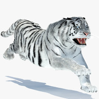 3d model amur siberian tiger rigged