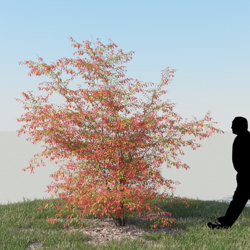 bush_autumn2_f_0000.jpg
