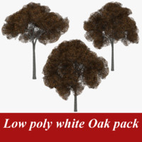 pack white oak tree 3d 3ds