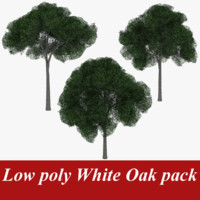 3d model of pack white oak tree