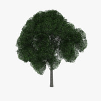 white oak tree 3d model
