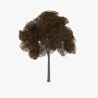 3d white oak tree