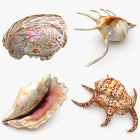 3d animal shell set model
