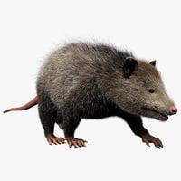3ds max possum fur pose 1