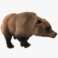 3d grizzly bear pose 4