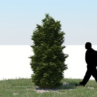 realistic thuja tree 3d model