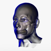 3d ma x-ray male face unrigged