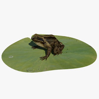 common british frog 3d model