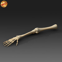 anatomy medical 3d fbx