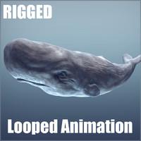 3d model sperm whale