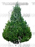 Tree 2d