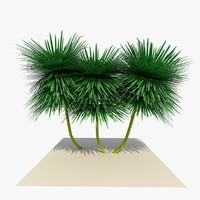 ready yucca plant 3d c4d