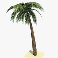 3ds max ready palm tree