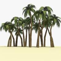 ready palm tree 3 c4d