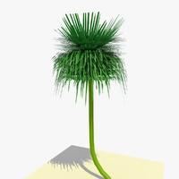 ready yucca plant 1 3d model