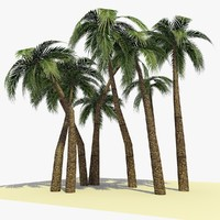 ready palm tree 2 3d 3ds