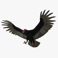 cathartes aura turkey vulture 3d obj