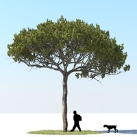 realistic stone pine obj