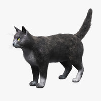 Domestic Cat(Gray)(FUR)