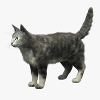 3d domestic cat fur hair model