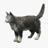 Domestic Cat (Fur)