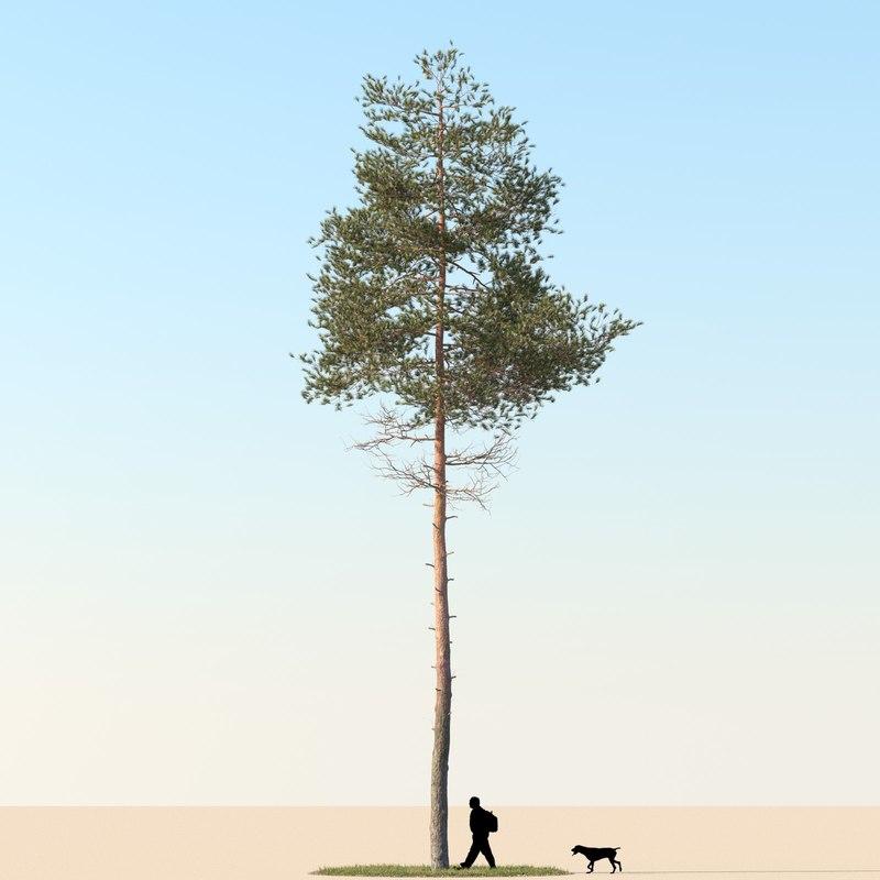 pine01_f_0000.jpg