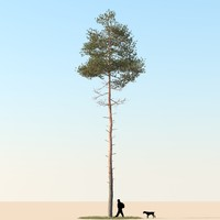 max realistic pine tree