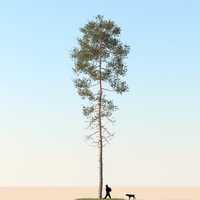3d realistic pine tree