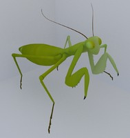 mantis fbx