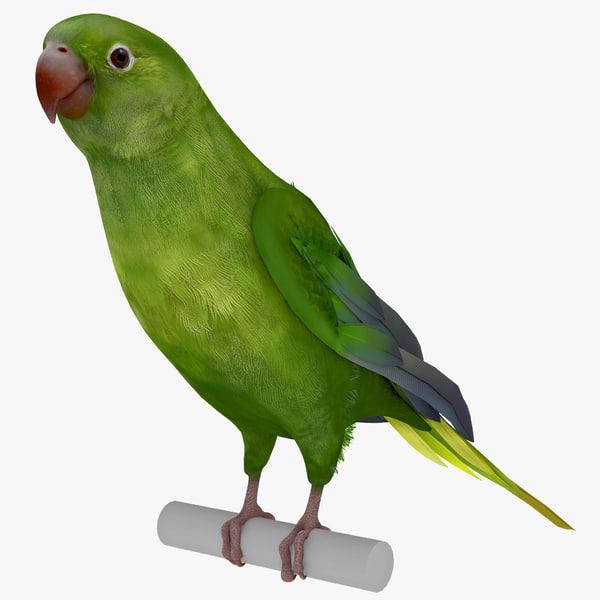 Parakeet parrot paroquet paraquet keet tropical pet vray zoo realistic