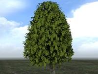 tree2