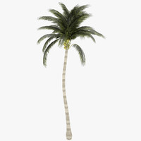 3d model coconut palm tree