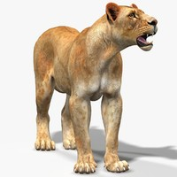 lioness rigging cat max