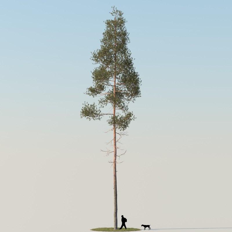 pine11_f_0000.jpg