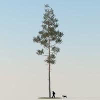 realistic pine tree 3d obj
