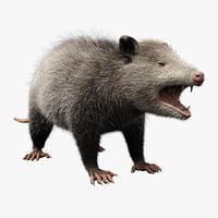 possum fur max