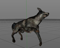 dog animation x