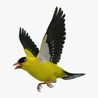 3d spinus tristis american goldfinch