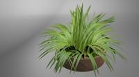 3d bush lily model