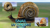 3d snail model