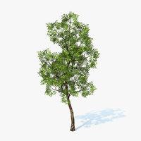 Tree Generic 01