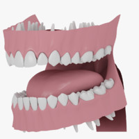 human gums teeth 3d model